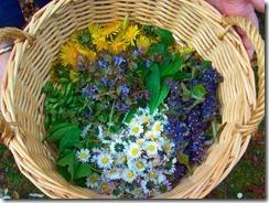 medicinal-plant-wild-herb-week-4b